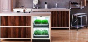 An Urban Cultivator Herb Garden