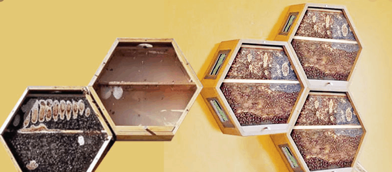 bees in your home