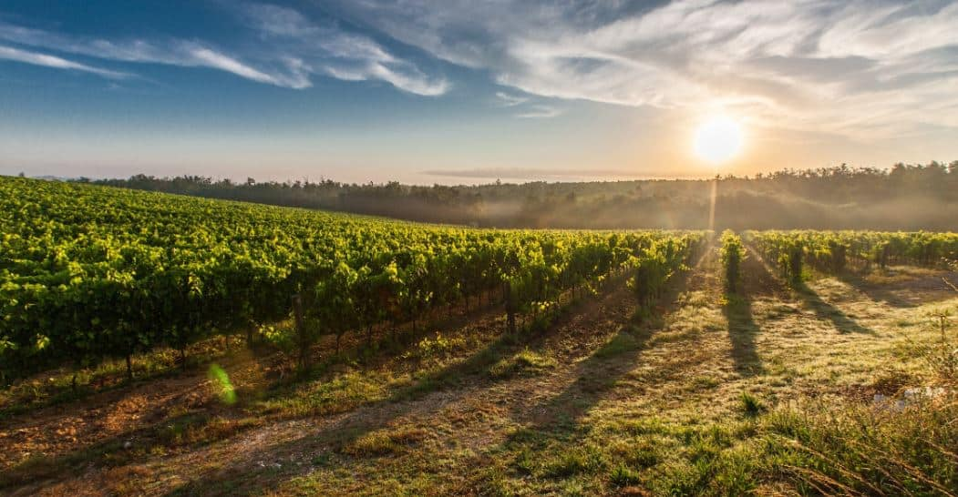 Top 12 Best Organic Wines Brands For 2021 | Whole People
