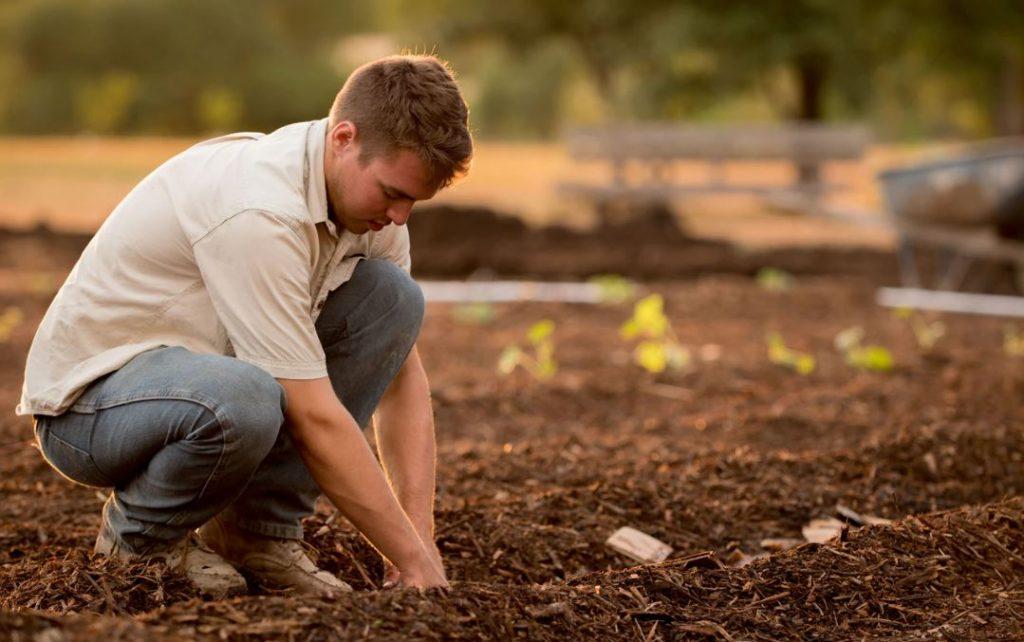 kitchen gardening with edge planting