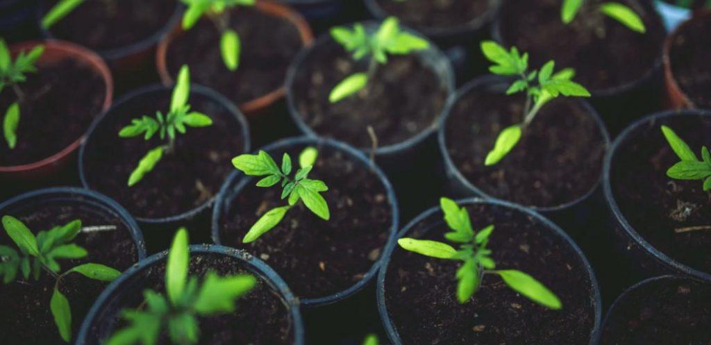 pick crops for kitchen garden