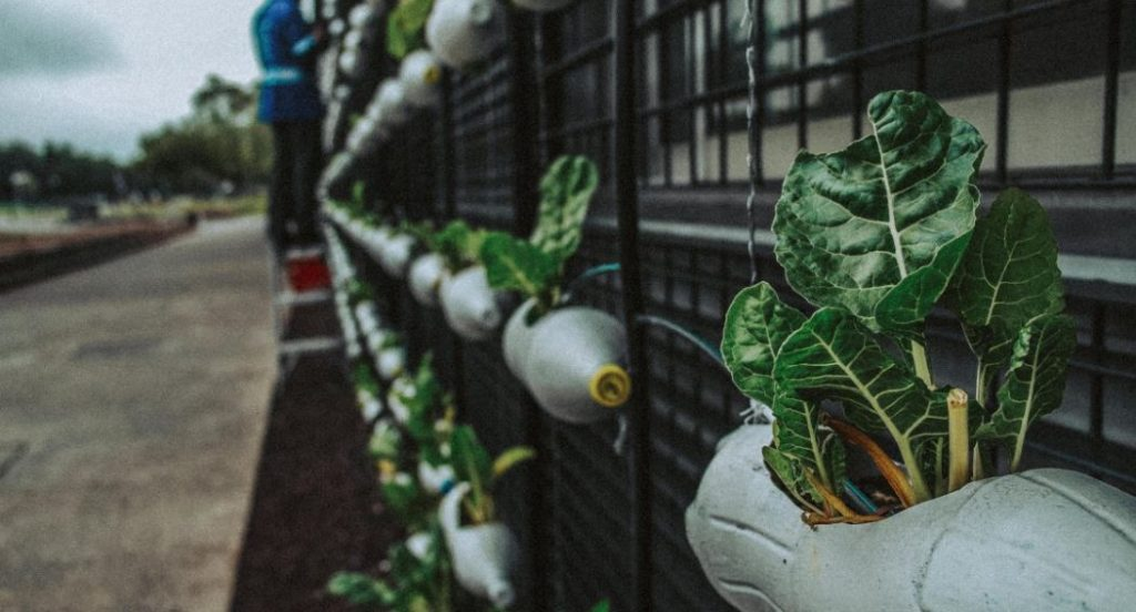 vertical gardening guide with tips and tricks