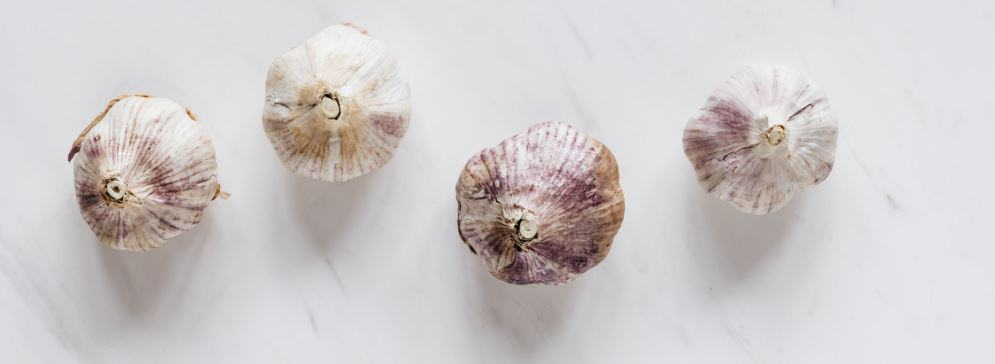 garlic as an insecticide