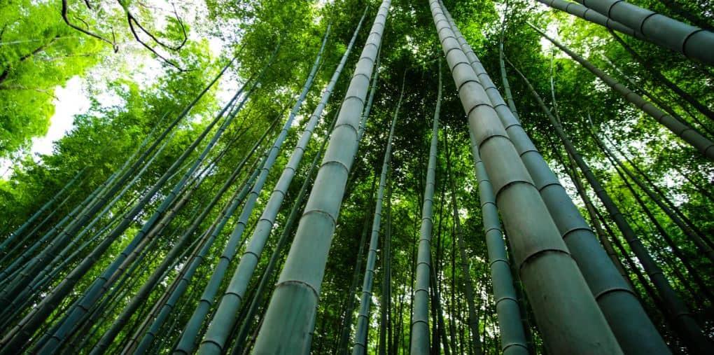 top picks for bamboo pillows brands