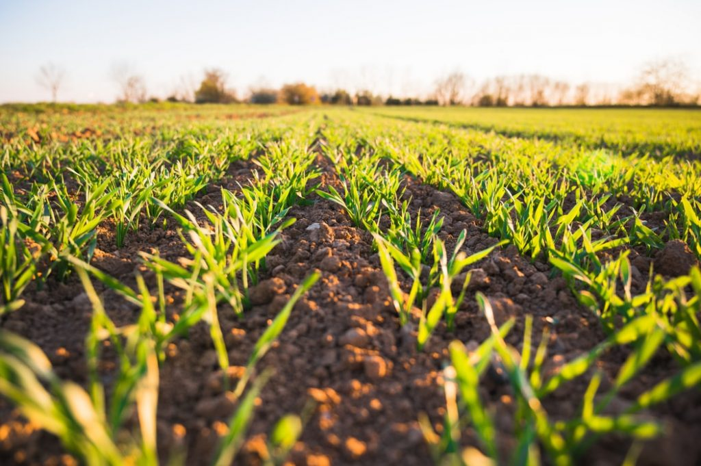 Awesome Regenerative Agriculture Primer for 2020