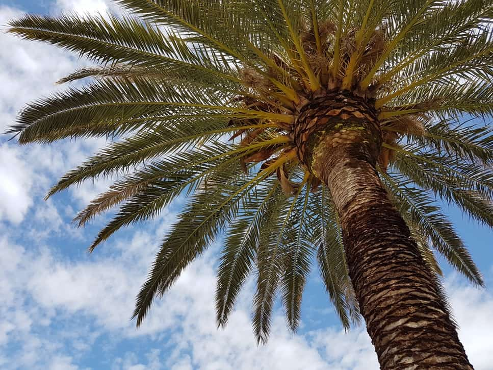 Palm Trees Are A Vegan Concern