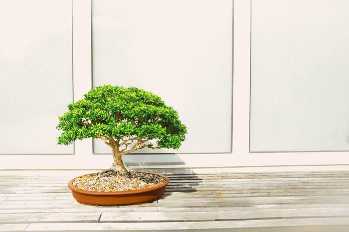 World's Smartest Bonsai Tree