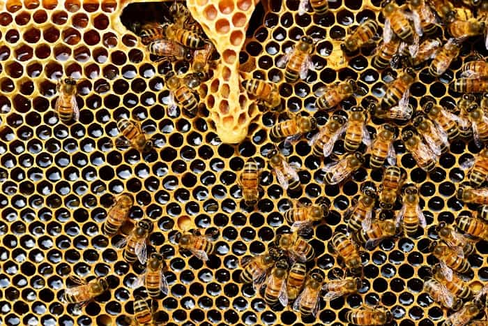 bees are killed for honey
