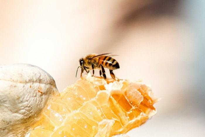 honey exploits honey bees