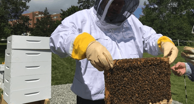 beekeeping therapy
