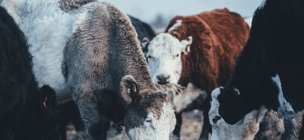 meat industry hurting