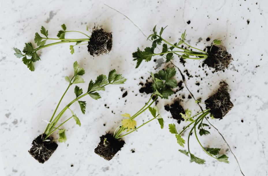 Urban Kitchen Gardening Guide for Beginners